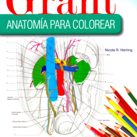 Grant – anatomia para colorear